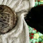 シンメトリーに眠る猫
